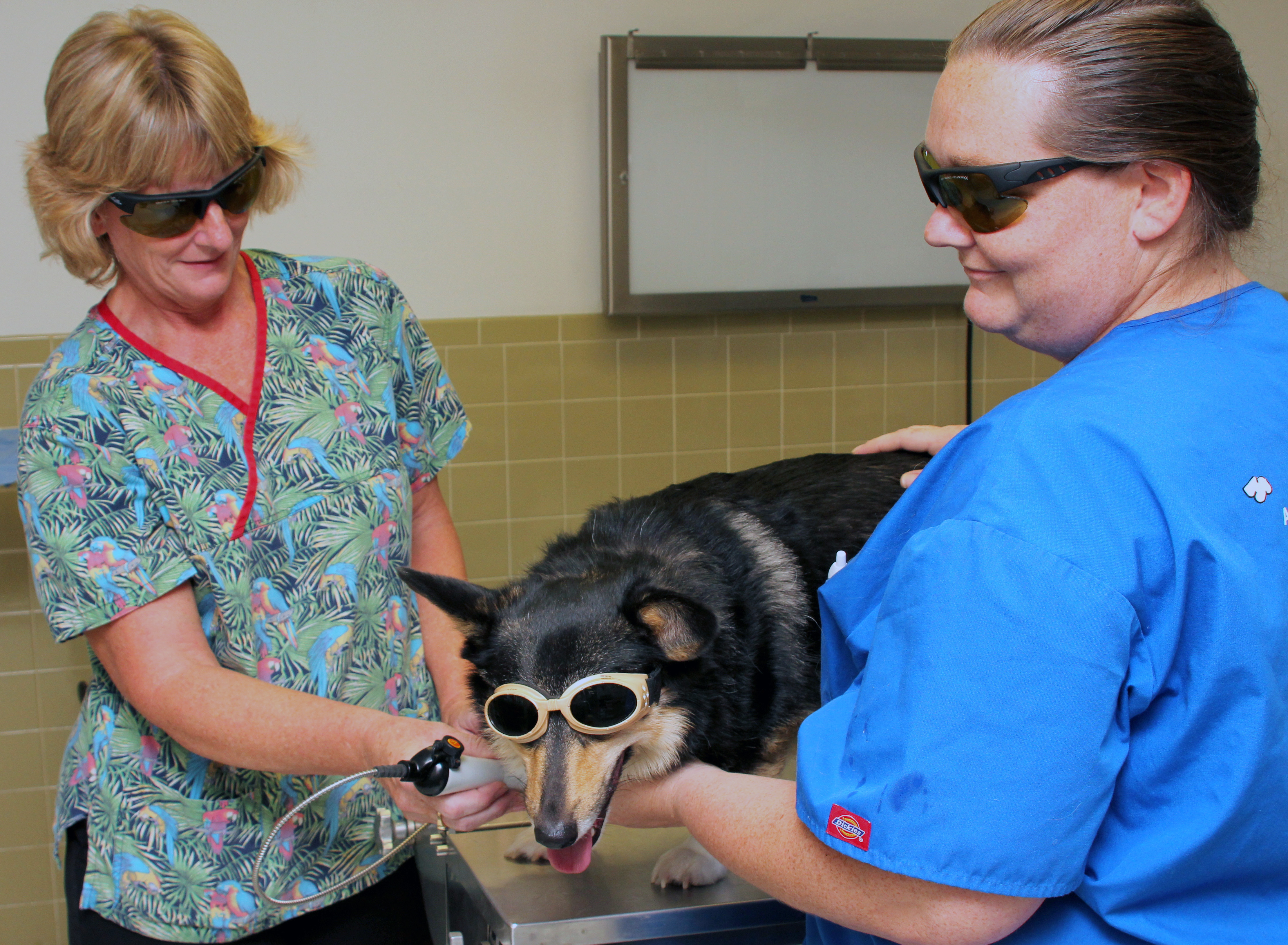 best_friends_veterinary_hospital_laser_treatment